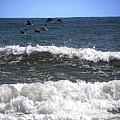 Pelican Flight   by Chris Mercer