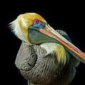 Pelican by Gabriel Jardim