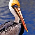 Pelican Head Shot by Michael Thomas