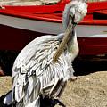 Pelican In Mykonos II by Madeline Ellis