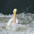 Pelican In Rough Water by Jeff Swan
