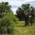 Pelican Island Nwr In Florida by Allan  Hughes