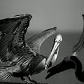 Pelican by Jane Melgaard