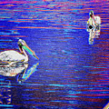 Pelican Mates 2 by Terry Anderson