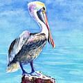 Pelican On A Post  by Carlin Blahnik CarlinArtWatercolor