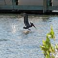 Pelican On The Waves by Roseann Stachowiak