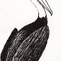 Pelican Paradise Portrait In Ink C2l by Ricardos Creations