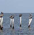 Pelican Parliament by Laura Martin