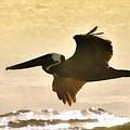 Pelican Patrol by Jim Proctor