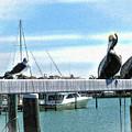Pelican Perch by Joan  Minchak