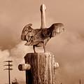 Pelican Perch by Karl Huggins