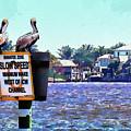 Pelican by Robert Salazar