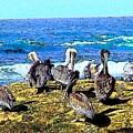 Pelican Rock by Mark Cheney