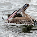 Pelican Secured Lunch by Wolfgang Stocker