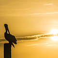 Pelican Silhouette At Sunset by Ray Sheley