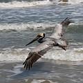 Pelican Soaring  by Christy Pooschke