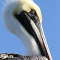 Pelican Soft by Jim Clark
