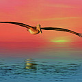 Pelican Sunset by Deborah Benoit