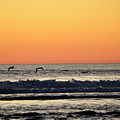 Pelican Sunset by Denise Bruchman