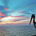 Pelican Sunset by Jost Houk