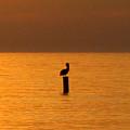 Pelican Sunset by Patricia Januszkiewicz