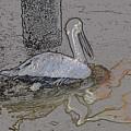 Pelican Swim IIi Color Pencil by Jody Lovejoy