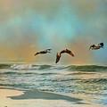 Pelican Trio by Jai Johnson