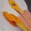 Pelican Twist by Marty Koch