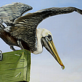 Pelican Wings by Phyllis Beiser