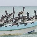 Pelicanos by Angel Ortiz