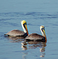 Pelicans 2 Together by Michael Thomas