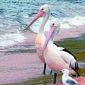 Pelicans At Pearl Beach 5.1 by Giro  Tavitian