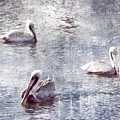 Pelicans At Rest by Lilliana Mendez
