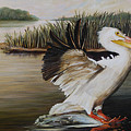 Pelicans At The Confluence by Dreyer Wildlife Print Collections
