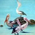 Pelicans by Olga Dik