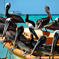 Pelicans On A Boat by Bibi Rojas