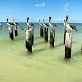 Pelicans On Pier Pilings by Robert McGough
