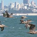 Pelicans Over San Francisco Bay by Brian Tada