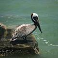 Pelican's Perch by Mandy Shupp