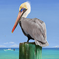 Pelicans Post by Kevin Putman