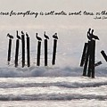 Pelicans Perched Quote by JAMART Photography