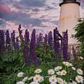 Pemaquid And Flowers by Darylann Leonard Photography