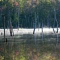 Pemigewasset Wilderness - White Mountains New Hampshire Usa by Erin Paul Donovan