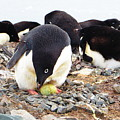Penguin And Her Egg by Harry Coburn