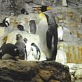 Penguin by Jost Houk