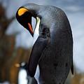 Penguin by Randy Matthews