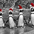Penguins With Santa Claus Caps by Juergen Ritterbach