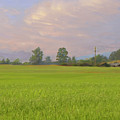 Penngrove Field by Thomas  Hansen