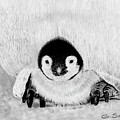 Penquin Chick by George Sonner