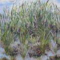 Pensive Grasses by Lisa Boyd
